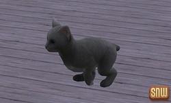 De Sims 3 Beestenbende: Oopsie-Daisy de kat