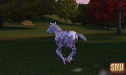 De Sims 3 Beestenbende: GooGoo het paard
