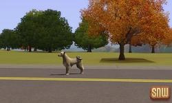De Sims 3 Beestenbende: Zwerfhond